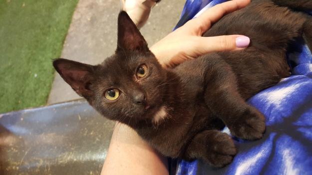 Kitten Kerry