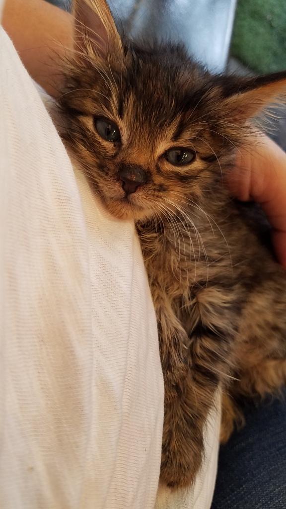 Baby cat 20160818_120116