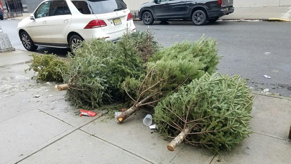 christmas-tree-20170111_112030_resized